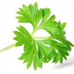 http://bletsas.gr/wp-content/uploads/2010/08/1115181_parsley_leaf-1-150x150.jpg